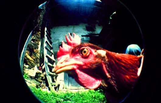 Los huevos de gallinas en libertad valen 3,4 veces más